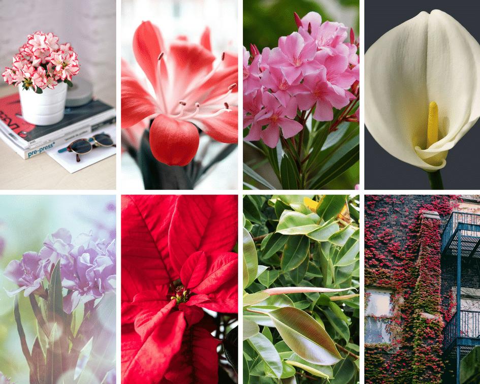 piante pericolose